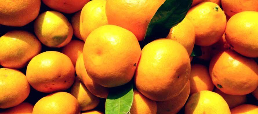 Mandarine iz Neretve u Vodicama, Rogoznici i Primoštenu po 3 kn/kg