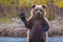 ZANIMLJIVOSTI: Očaravajuće fotografije životinjskog carstva