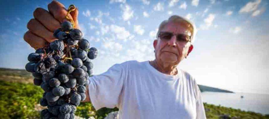U Primoštenu pokopan predsjednik udruge vinogradara i maslinara: Šjor Ante Gracin krčio je Bucavcu put prema listi UNESCO-a