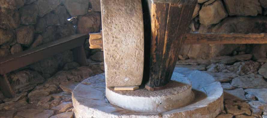 IZ ŠKAFETINA: Prerada maslina – uljarne u Selu