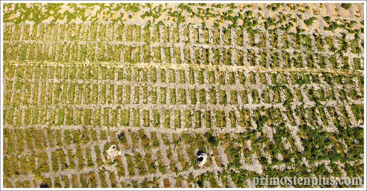 Primošten vinogradi