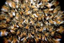 Pčele masovno izumiru i ne piše nam se dobro