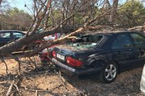 Bura srušila stablo na dva parkirana auta