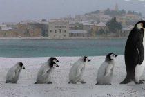 FORA PLUS – Pingvini
