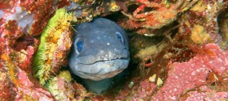 FOTO: Podmorski svijet primoštenskog arhipelaga kroz objektiv našeg čitatelja Iana Morrisona