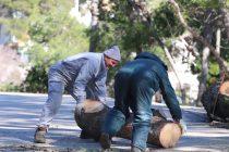 Snažna bura počupala bor u Portu